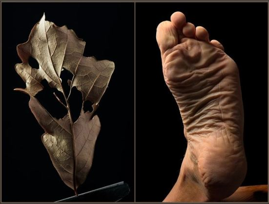 Autumn Leaves: Reflections on Aging Photography by Howard Zehr